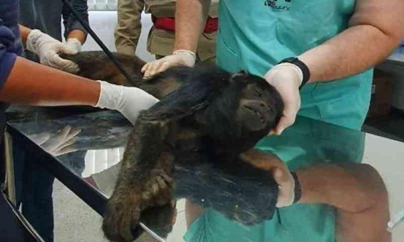 Casal resgata macaco atropelado na GO-174, em Rio Verde, GO