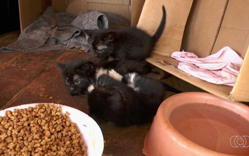 Voluntários fazem campanha para castrar e cuidar de gatos abandonados em parque de Goiânia — Foto: Reprodução/TV Anhanguera