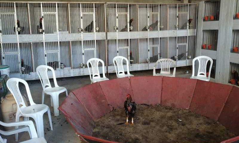 Local de rinha de galo encontrado pela PM após denúncia em Senador Canedo — Foto: Divulgação/Polícia Militar