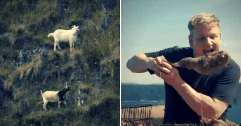 Gordon Ramsay criticado por atirar em cabra da montanha, cozinhá-la por três horas e comê-la: 'vergonha de você'