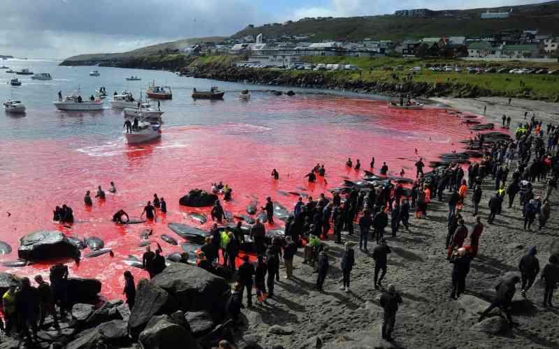 Decisão do Japão de retomar a caça à baleia é 'decepcionante', diz premiê britânico ao primeiro-ministro nipônico