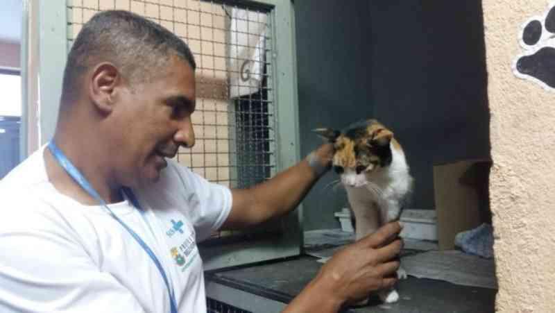 Conheça cinco locais para castrar gratuitamente cães e gatos em Belo Horizonte, MG