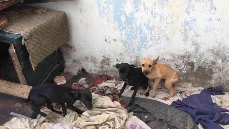 PM resgata cães vítimas de maus-tratos em casa, na Grande BH