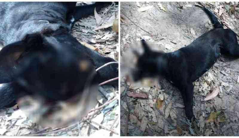 Cadela é assassinada com tiro na cabeça na região metropolitana de Belo Horizonte, MG