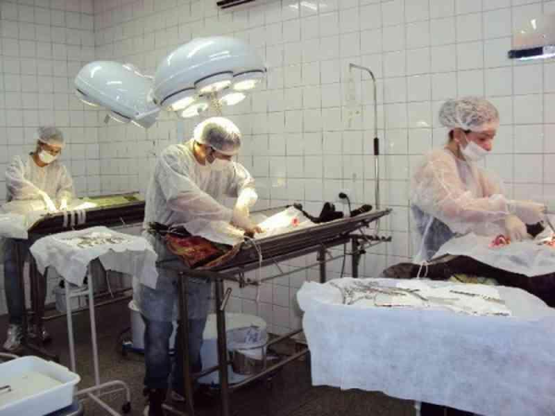 Sala cirúrgica do Centro de Referência de Vigilância em Saúde é cedida para castração de animais em Divinópolis, MG