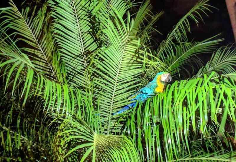 Arara-amarela fica presa em árvore de oito metros em Ituiutaba, MG; bombeiros são acionados