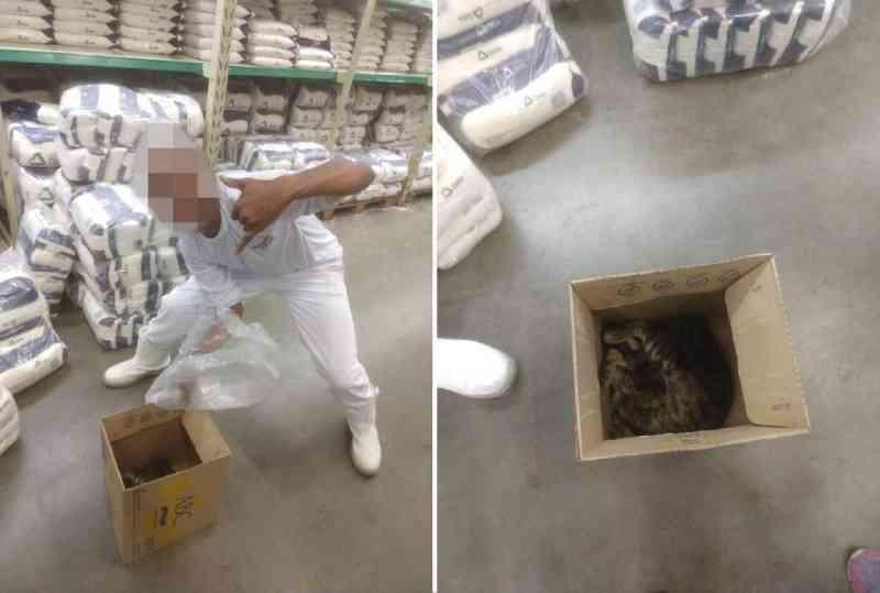 Internautas denunciam suposta matança de gatos em rede atacadista em MG