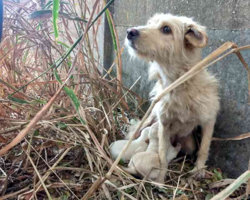 Cachorrinha e seus filhotes, presos em cisterna há dois dias, são resgatados em Juatuba, MG
