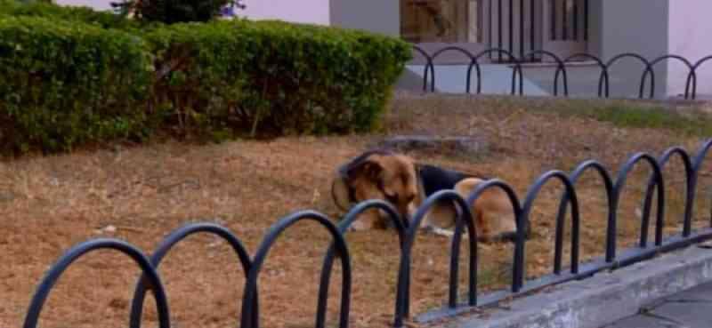 Polícia Civil instaura inquérito para apurar casos de animais envenenados em Santo Antônio do Monte, MG