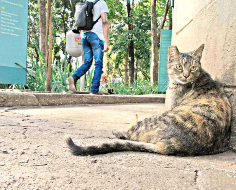 Nesta quinta-feira (8) foi celebrado o Dia Internacional do Gato; felinos do parque são tratados por voluntários