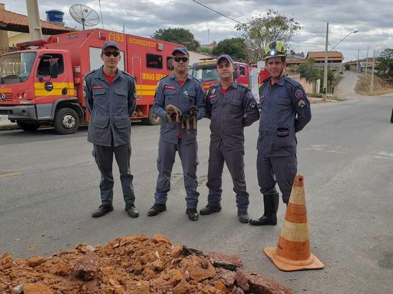 Bombeiros resgatam animais em bueiro em Bom Despacho — Foto: Corpo de Bombeiros/Divulgação