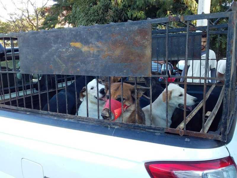 Cães foram resgatados e levados ao canil municipal — Foto: Edson Simões/Arquivo pessoal