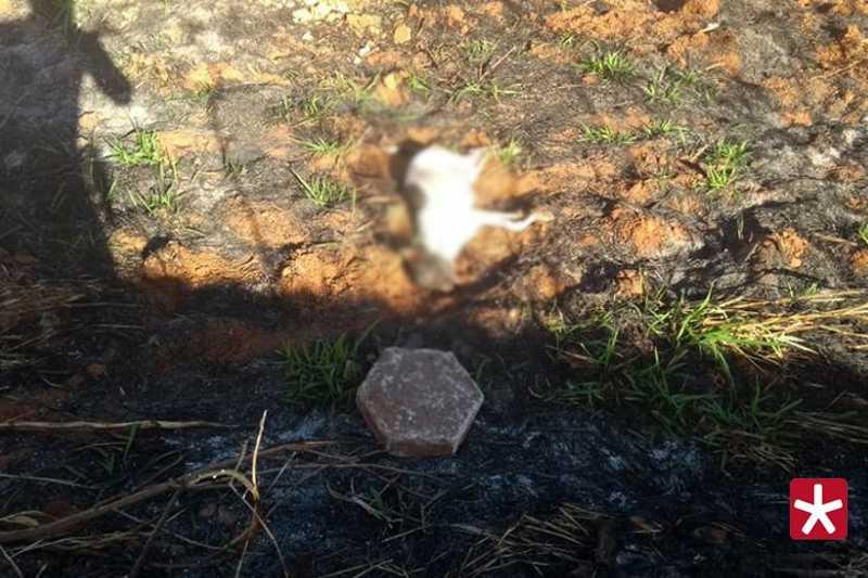 Segundo a polícia, o animal foi agredido até a morte com bloco de concreto