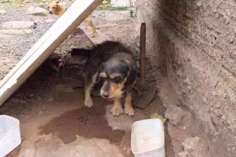 Cães sem água e deixados no sol: morador é autuado por maus-tratos pela PMA em Corumbá, MS