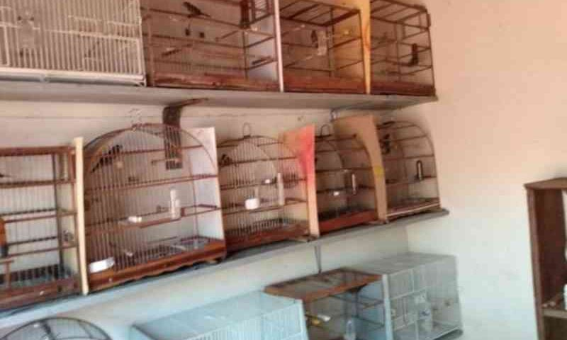 Criador tinha autorização, mas capturava até ave em risco de extinção em Pedro Gomes, MS