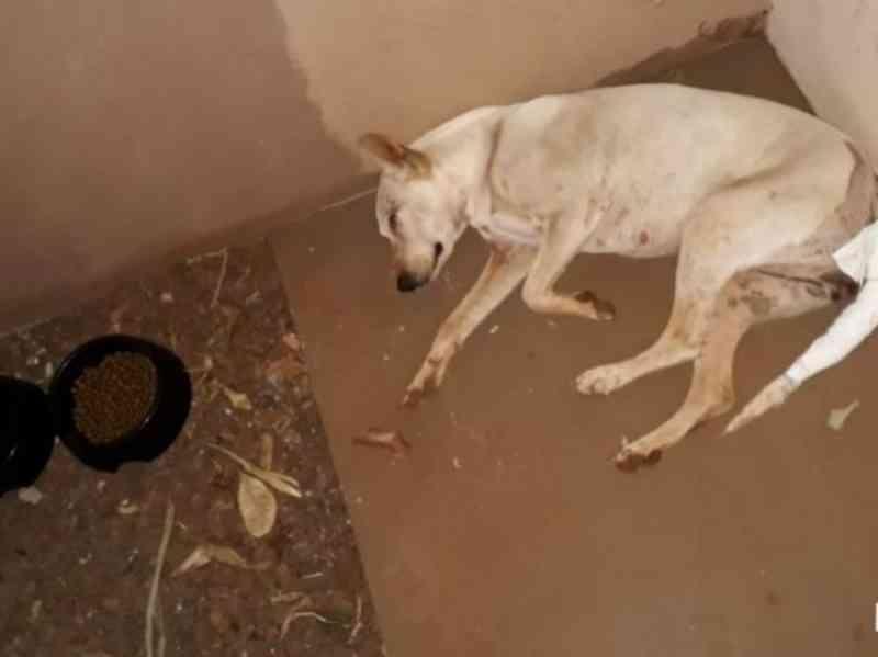 Polícia busca suspeito de praticar zoofilia em cadela encontrada ferida em São Gabriel do Oeste, MS