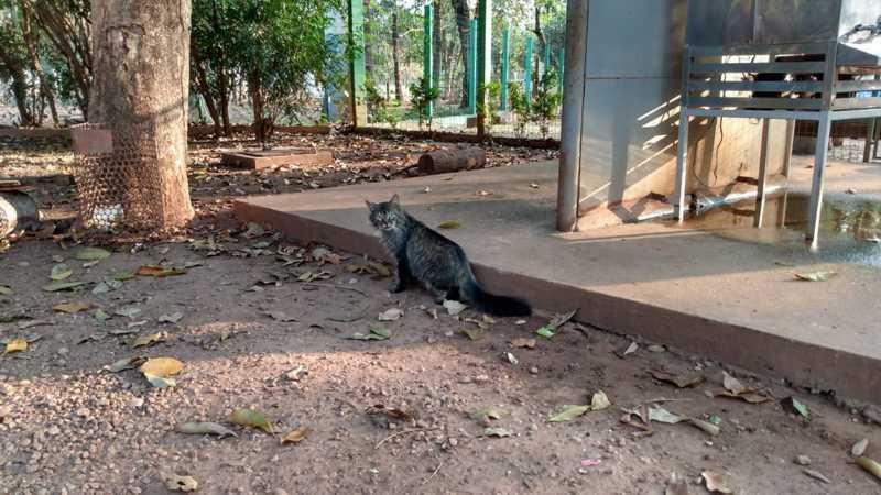 Animais são frequentemente abandonados no horto florestal de Rondonópolis — Foto: Emerson Sanchez/TV Centro América