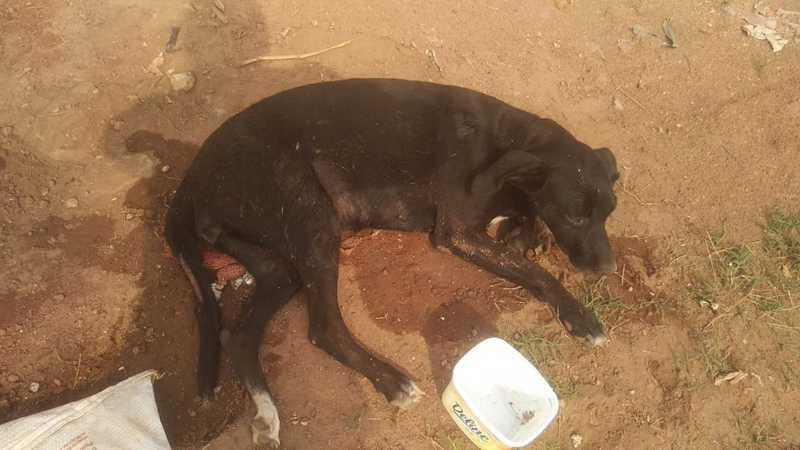 Animal resgatado estava debilitado — Foto: Wilma Alvez Mundim/ Arquivo pessoal