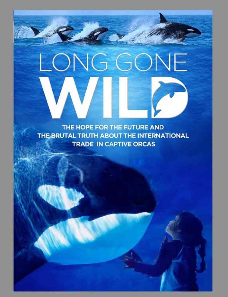 Novo documentário, 'Long Gone Wild' captura a situação das orcas em cativeiro