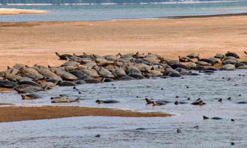 MPF pede plano emergencial para frear pesca ilegal de quelônios no sudoeste do Pará