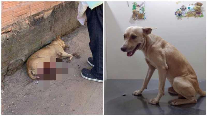 Animal foi resgatado pela ONG União Animal — Foto: ONG União Animal/Pet Sol