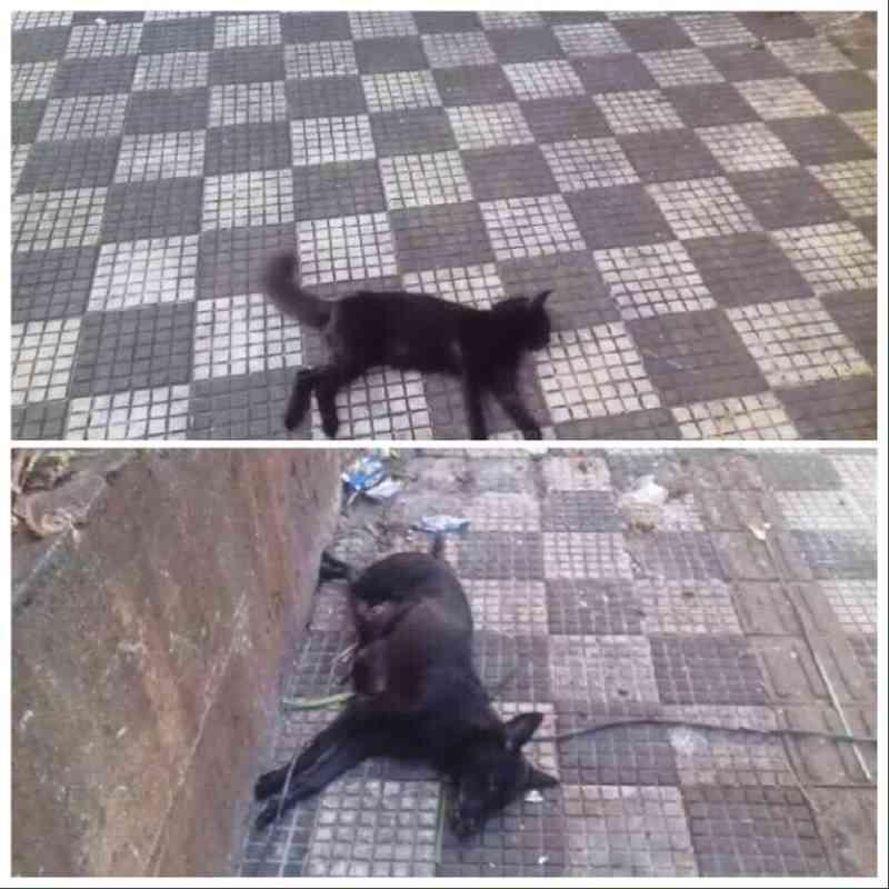 Vários animais são encontrados mortos em mercado público de João Pessoa, PB; veja vídeos