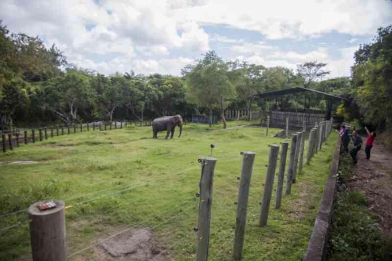 Elefanta Lady deverá ser transferida para 'lugar mais adequado'