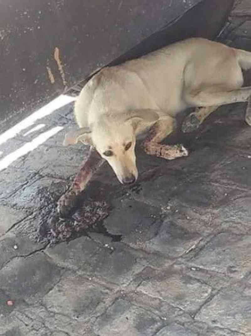 Cão abandonado aparece com sintomas de envenenamento e caso revolta moradores em Pombal, PB; animal não resistiu