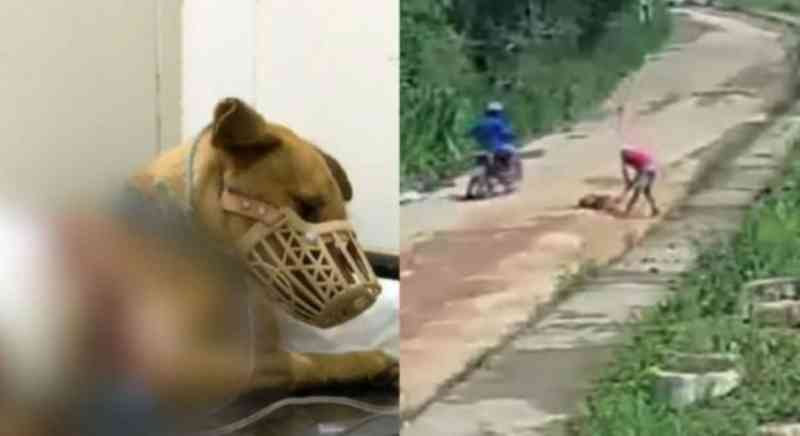 Dentro de 3 dias, dois casos de violência brutal contra cachorros são registrados em Pernambuco