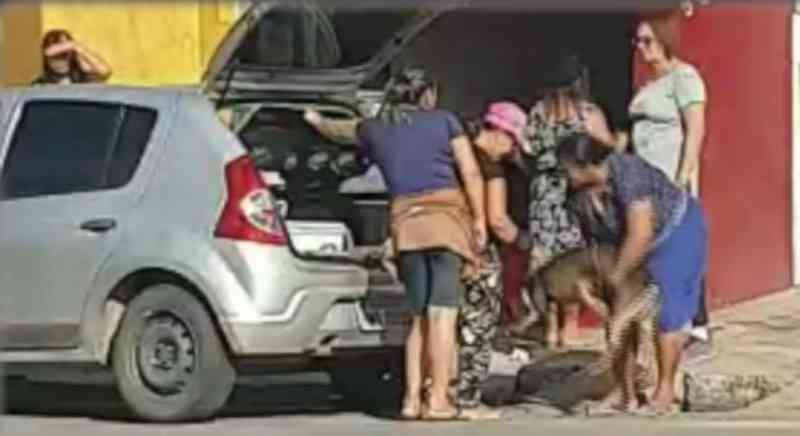 A mulher arruma o cão e depois fecha a mala e entra no carro para seguir viagem - Foto: Reprodução/TV Jornal