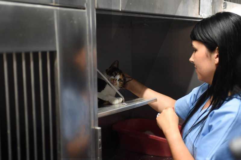 319 gatos esterilizados ao abrigo do programa CED em Braga, Portugal