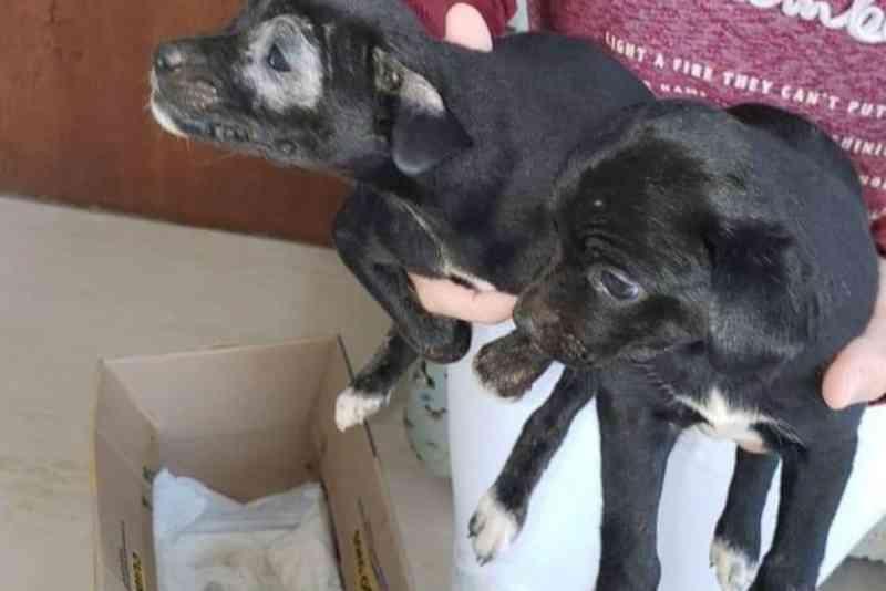 Filhotes de cachorro abandonados são jogados de janela de carro em Campo Mourão, PR
