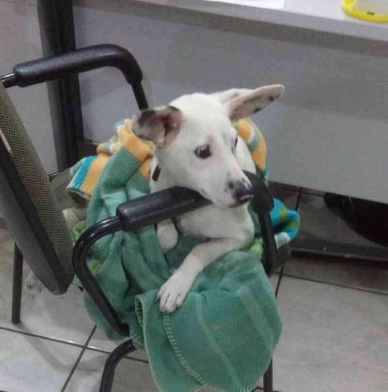 Homem que quebrou pata de cachorro é identificado pela GM e obrigado a custear tratamento do animal