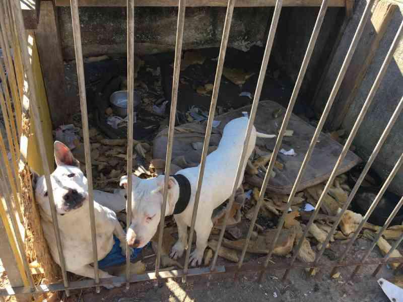 Homem é preso por manter cães em extremas situações de maus-tratos em Curitiba, PR