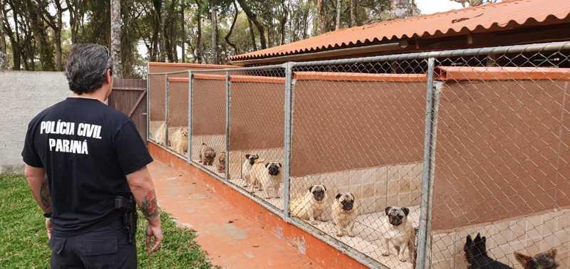 Polícia Civil cumpre mandados de busca e apreensão contra rede de pet shops suspeita de golpes e maus-tratos a animais, em Curitiba e São José dos Pinhais — Foto: Polícia Civil/Divulgação
