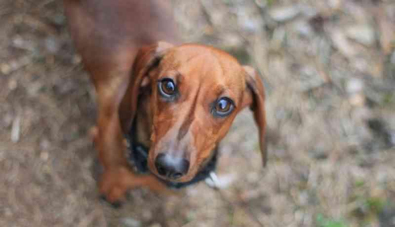 Esventrou cadela e foi condenado a prisão. Agora pode abolir a Lei dos Maus Tratos a Animais em Portugal