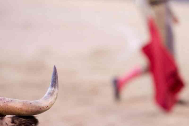 Touros de morte: 'É incompreensível que a morte pública de um animal seja espetáculo'