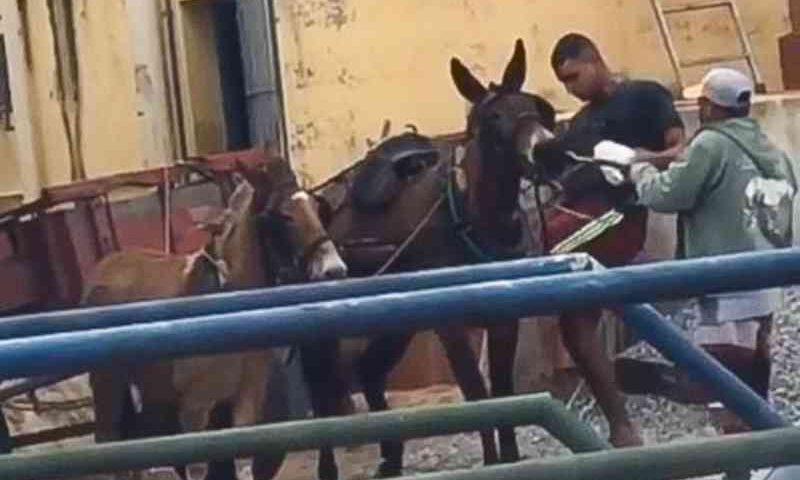 Vídeo com homem agredindo burros em carroça causa revolta em Campos, RJ