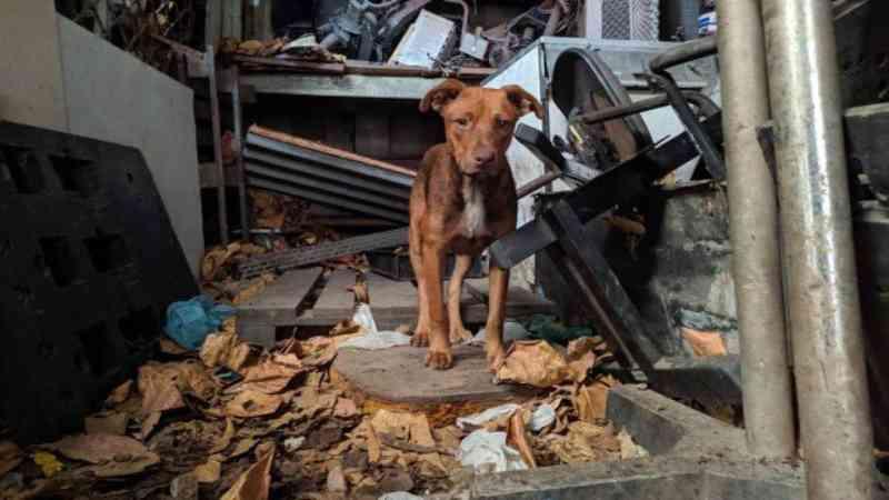 Cães mantidos em condição insalubre na zona oeste do Rio são resgatados