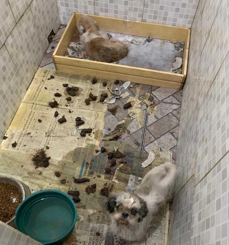 Cãozinho sem olho e em meio a fezes — Foto: OAB/RJ