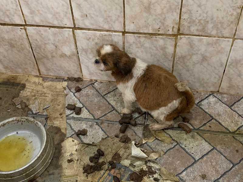 Cãozinho em cubículo com fezes — Foto: OAB/RJ