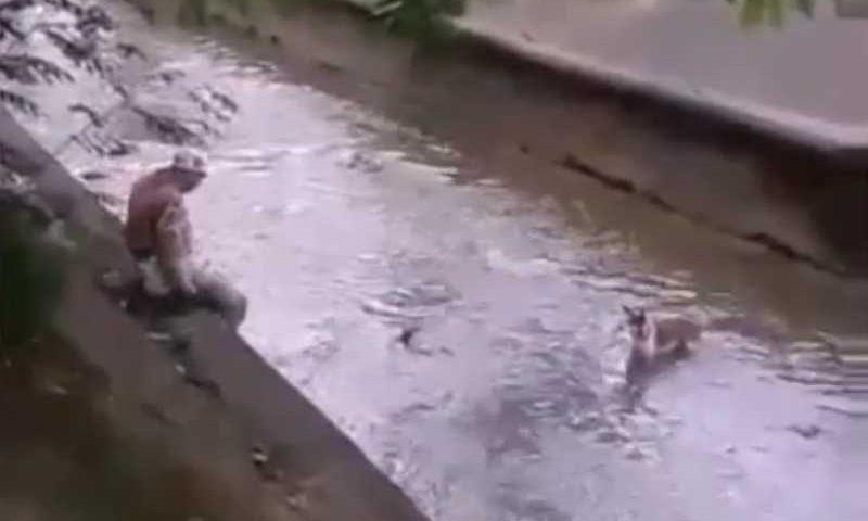 Guarda municipal resgata cachorro que caiu no Rio Maracanã; veja vídeo