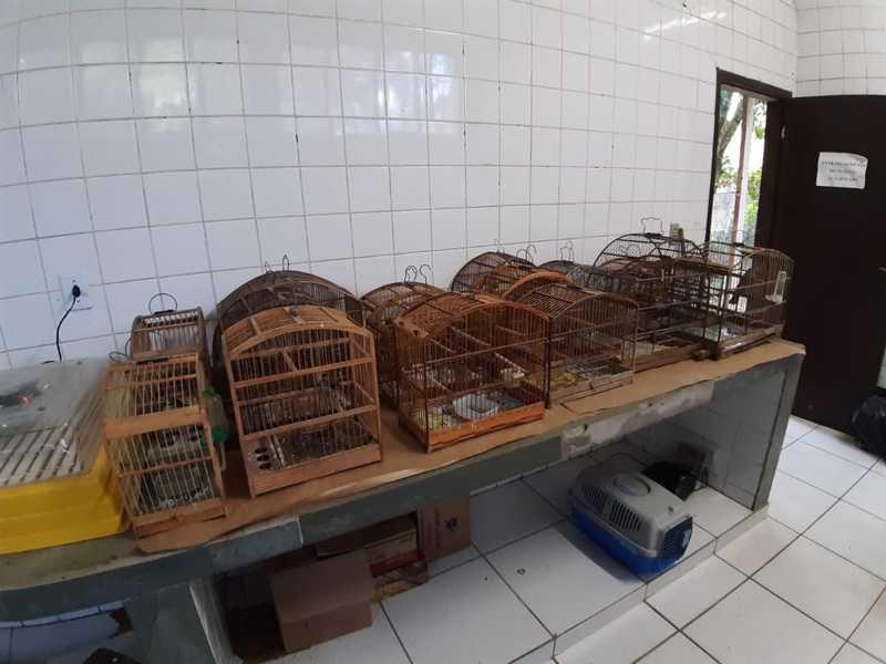 Pássaros apreendidos em Volta Redonda — Foto: Guarda Ambiental