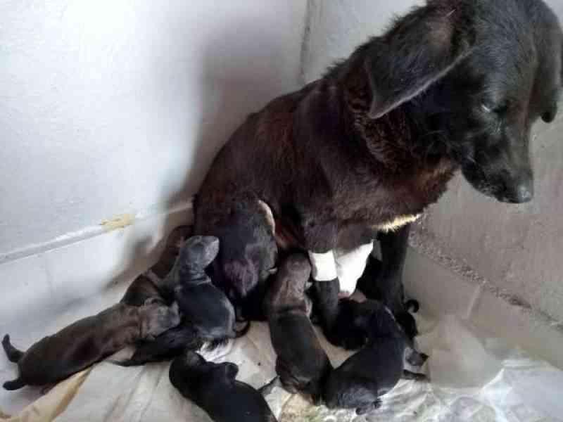 Em Vilhena (RO), cadelinha doente tentava parir, enquanto moradores jogavam água para 'espantar'