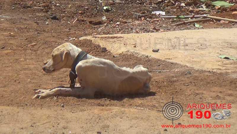 Polícia Militar é acionada após denúncia de maus tratos a cachorro no Setor 09, em Ariquemes, RO