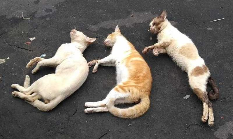 Gatos foram encontrados caídos / Foto: Ilustrativa