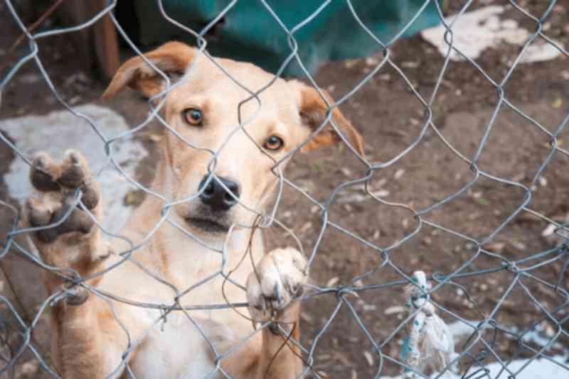 Campanha contra o abandono de animais é tema de projeto de lei em Igrejinha, RS