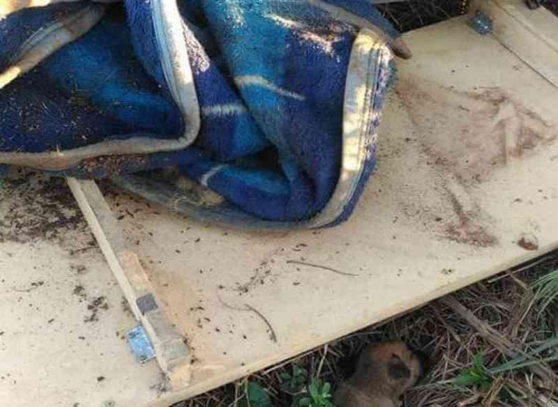 Cachorros são encontrados mortos no Distrito Industrial, em Panambi, RS