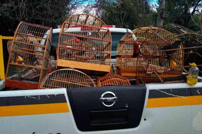 Brigada encontra 63 pássaros silvestres em cativeiro em Rio Pardo, RS