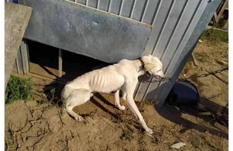 Operação da Polícia Civil resgata mais de 40 cachorros em canil no interior de São Lourenço do Sul, RS